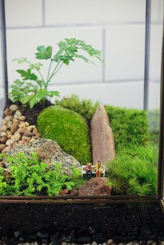 Large Leaded Glass Terrarium
