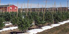 Colorado County Funds College Scholarship With Marijuana Money - Huffington Post