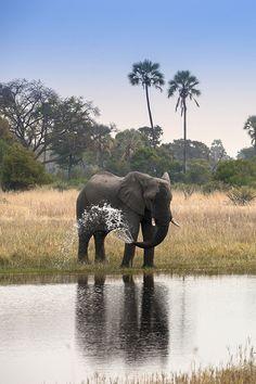 Elefant beim Baden | © andBeyond Sandibe Okavango Safari Lodge