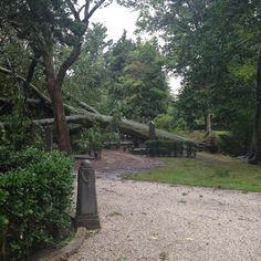 Monumentale boom begraafplaats Kleverlaan om. #storm