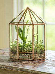 Tabletop Terrarium – Glass Terrarium – Plant Terrarium