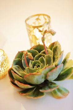 succulents and votives places throughout buffet  madeline.brandon.wedding Photo By >>Gideon Photography-Available For Travel<