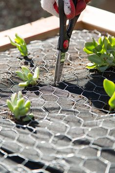 Vertical Succulent Garden Tutorial – The Home Depot Snipping holes the landscape fabric to create … Succulent Wall Planter, Vertical Succulent Gardens, Hanging Succulents, Succulent Gardening, Succulents Garden, Container Gardening, Herbs Garden, Wall Planters, Fruit Garden