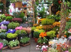 С чего начать цветочный бизнес: основа и тонкости