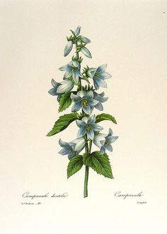 vintage botanical