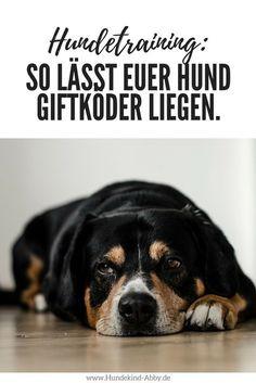 #Hund #Hundeblogger #Hundeliebe #Wissen #Hundeerziehung #Antigiftkurs