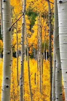 Google Image Result for http://2.bp.blogspot.com/-K5Qew6xQBI0/TvPcvn8BTSI/AAAAAAAABDA/CY13sQ5z46M/s1600/yellow.jpg