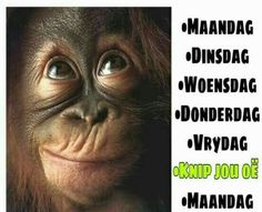 Best Quotes, Life Quotes, Afrikaanse Quotes, Wise Words, Humor, Sayings, Funny, African, Motivational