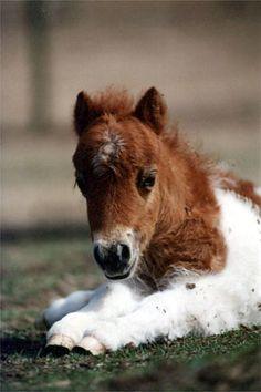 Választható lovak
