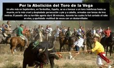 Every  september in Tordesillas, Spain TORTURE IS NOT CULTURE!!!!!! Write .against this barbarie :http://www.tordesillas.ayuntamientosdevalladolid.es/?q=contact