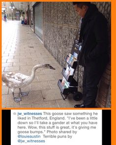 Cart witnessing in England