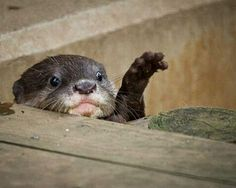 Oh no little otter! I'll pick you up outbid the water!