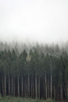 ... isn't it just like the trees are breathing out on a cold day, creating this fog? I'm in love <3