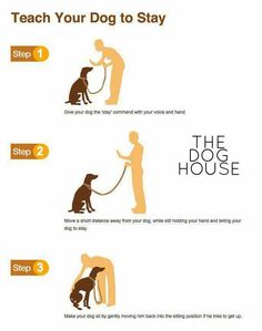 Teaching your dog is centered on building your relationship with your pet dog and establishing boundaries. Be firm yet consistent and you will notice impressive results when it comes to your dog training work. Guide Dog Training, Dog Training Books, Dog Training Treats, Training Your Dog, Agility Training, Training Equipment, Potty Training, Training Pads, Training Schedule