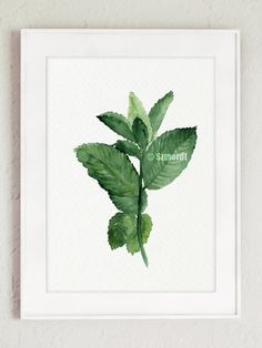 Mint Watercolor Painting, Herbs Poster, Green Leaves, Botanical Print, Herb Kitchen decor, Home garden gift idea by ColorWatercolor on Etsy