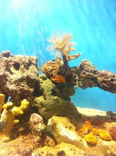 Arrecife soñado