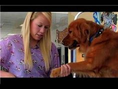 Grooming a Golden Retriever! - Love Dogs NOW! Dog Grooming Tips, Dog Grooming Business, Gsd Puppies, Pet Puppy, Dogs Golden Retriever, Golden Retrievers, Retriever Dog, Dog Tumblr, Puppy Breeds