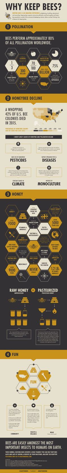 Beekeeping for Beginners: Why Keep Bees? Designed by Murmur Creative