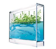 Live ants in stock! With these ant farms for kids, watch live ants and tropical plants in a balanced environment.