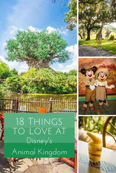 18 Things to Love at Disney's Animal Kingdom | Rolling with the Magic