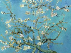 Almond Branches in Bloom, San Remy, c.1890 Posters by Vincent van Gogh at AllPosters.com