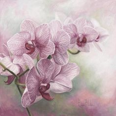 Graceful Orchids Art Print by Lucie Bilodeau - Acrylic painting - Orchidee Art Floral, Watercolor Flowers, Watercolor Paintings, Watercolour, Orchids Painting, Pink Painting, Image Painting, Belleza Natural, Wildlife Art