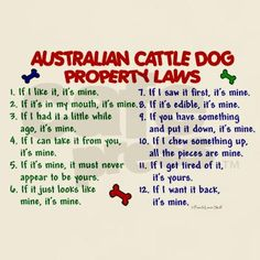 Australian Cattle Dog Property Laws. Feels like these are familiar.......... Chief. lol