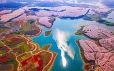 China Looks Magical Covered in Spring Flowers – See for Yourself in This Drone Footage | China is carpeted in fields of colorful flowers every spring, making for a mesmerizing view.