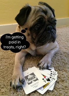 Poker pug The sweetest Dog