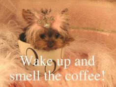 Wake up & smell the coffee!