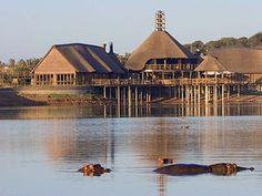 Buffelsdrift Game Lodge  #hippos