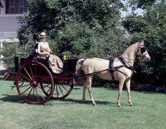 Dog Cart Basel, um 1900 Carrosserie Kauffmann, Reinbolt & Christe, Successeurs // ENGLISH: Dog cart Basle, Carrosserie Kauffmann, Reinbolt & Christé, Successeurs, ca. 1900 #Basel #kutschen #carriage #slide #pferdestaerken #horsepower #wagen #transport #museum #schweiz #ps