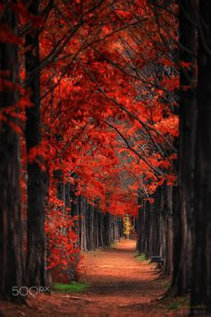 Red road - The leaves were turning red.