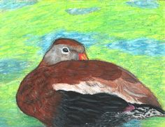 The 2013 Florida Junior Duck Stamp of Gabrielle Moriarty, 16, honorable mention in Group 4, grades 10-12. DDWS photo