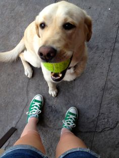 Dog playing with a ball.