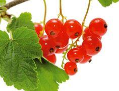 Fruit, Vegetables, Garden, Photos, Garten, The Fruit, Gardening, Vegetable Recipes, Outdoor