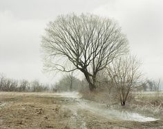 Joel Sternfeld The East Meadows, Northampton, Massachusetts, April 19, 2007 from Oxbow Archive