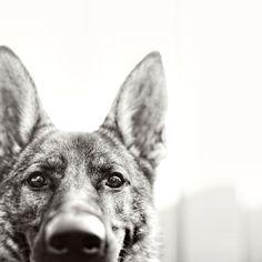 Dog Photography by Ashley Randall