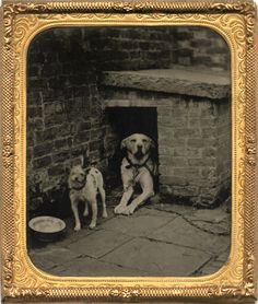 ca. 1860s, [ambrotype portrait of two dogs at their kennel] via I Photo Central, Contemporary Works/Vintage Works