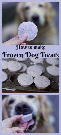 Homemade Dog Food How to make homemade Frosty Paws or Homemade Frozen Dog treats that your dog will gobble up. - Homemade frozen dog treats otherwise known as frosty paws Puppy Treats, Diy Dog Treats, Homemade Dog Treats, Dog Treat Recipes, Healthy Dog Treats, Dog Food Recipes, Best Treats For Dogs, Best Dogs, Frosty Paws Recipe