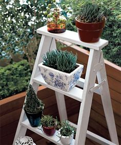 It's funny how a few little cacti/pot plants can make simple step ladders seem so much more than they really are. http://www.ladders-online.com/Step-Ladders #gardenideas