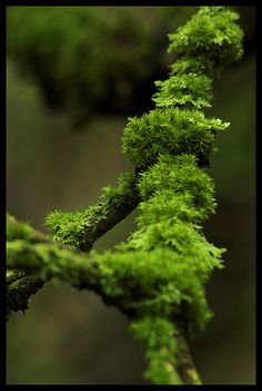 This shot of moss growing on a twig is the kind of shot I like.