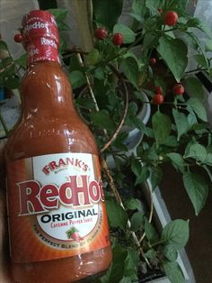 ... sauce to ketchup and mayo to get a French fries sauce. @franksredhot1