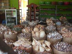 Java Seashells