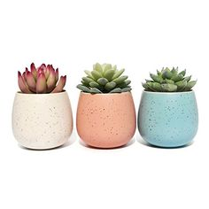 Succulent Planter Pot - Set of 3 - Assorted White Blue and Pink Ceramic Decorative Small Flower Plant Pot with Drainage - Home Office Desk Garden Mini Cactus Pot Indoor Decoration (White+Blue+Pink) Cactus Plant Pots, Mini Cactus, Potted Plants, Indoor Planters, Ceramic Planters, Planter Pots, Cement Planters, Indoor Garden, Succulent Gardening