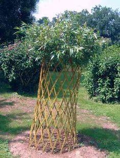crengi de salcie Living Willow, Willow Weaving, Tree Shapes, Beautiful Landscapes, Pergola, Outdoor Structures, Nature, Plants, Bonsai