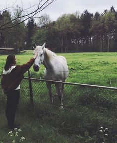 I also started my Holsteiner gelding on Equine Mega Gain and in just… – Art Of Equitation Cute Horses, Pretty Horses, Horse Love, Horse Girl, Beautiful Horses, Animals Beautiful, Animals And Pets, Cute Animals, Farm Lifestyle