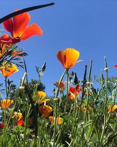 "Páči sa mi to: 22, komentáre: 4 – Martin Bugár (@martinnbugar) na Instagrame: ""Love this one 🌷🌈 #2017 #flowers #grass #summer #perfect"""