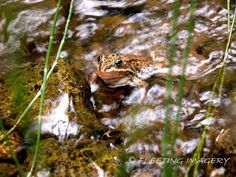 Image detail for -Gallery - Natures Creatures