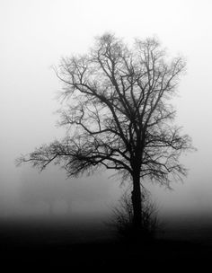 nothing more beautiful than a tree......<3